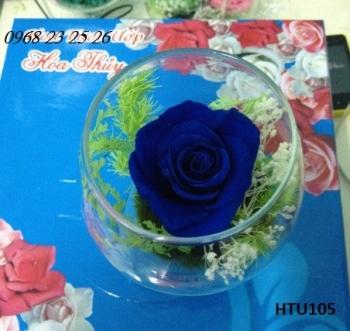 hoa htu105